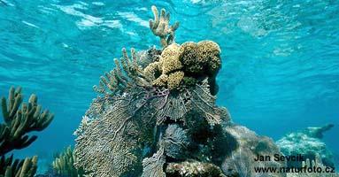 Social reefs